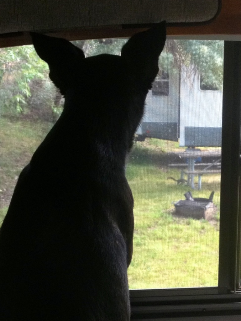 Calle on squirrel watch